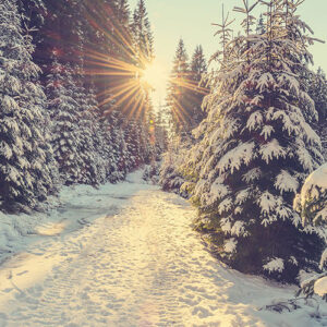 ashleigh & burwood kerstmarkten 2020